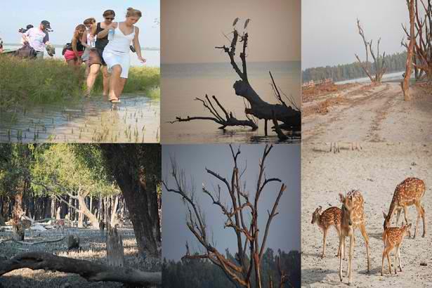 Vues de la forêt la Mangrove