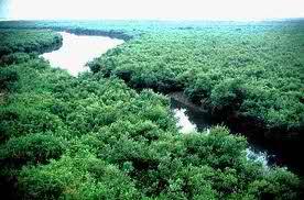 Vue aérienne de la rivière la Tista
